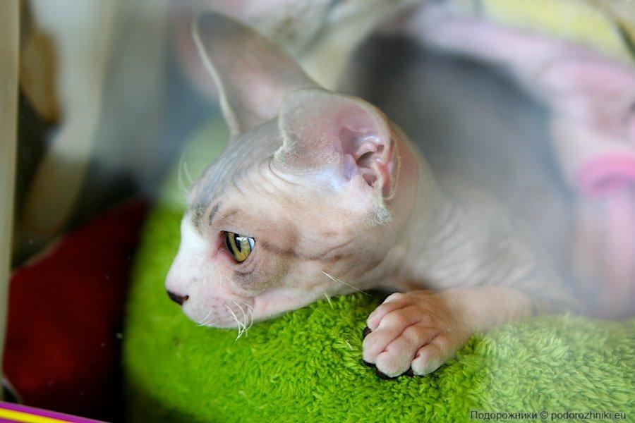 Выставка кошек в выставочном центре Брно