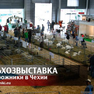 Сельхозвыставка в Брно