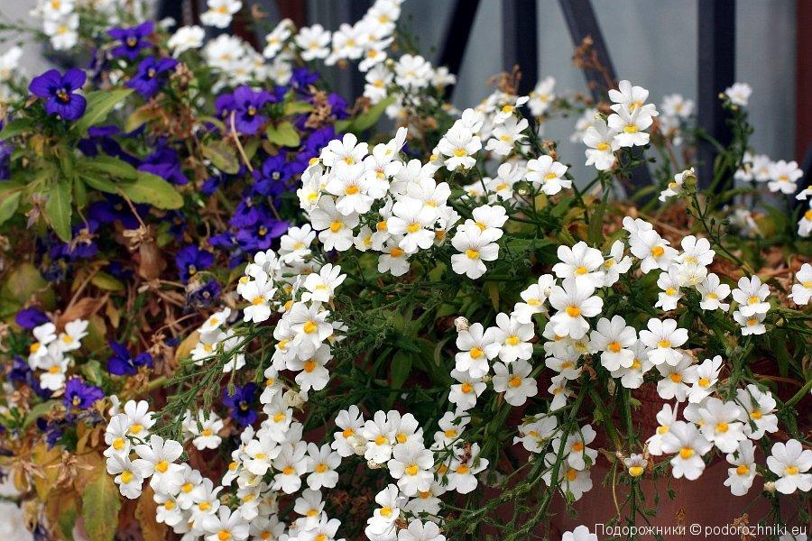 Цветочки в Тревизо