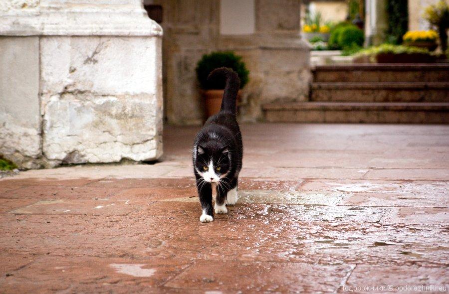 Черный разговорчивый кот