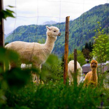 Санкт Гильген и его животные. Австрийский дневник