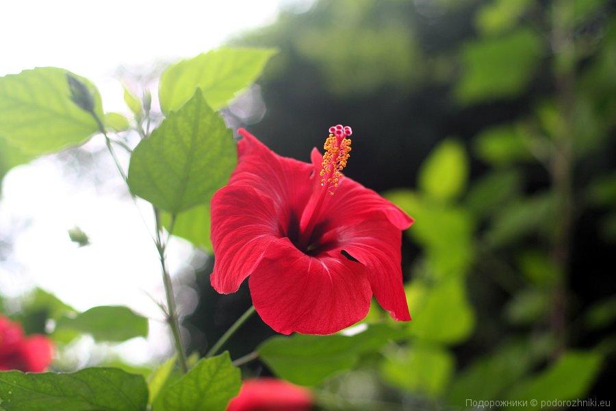 Цветок из Ледницкой оранжереи