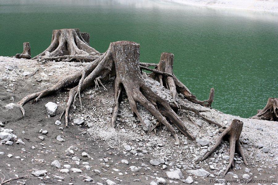 Пни на озере Переднее Гозау