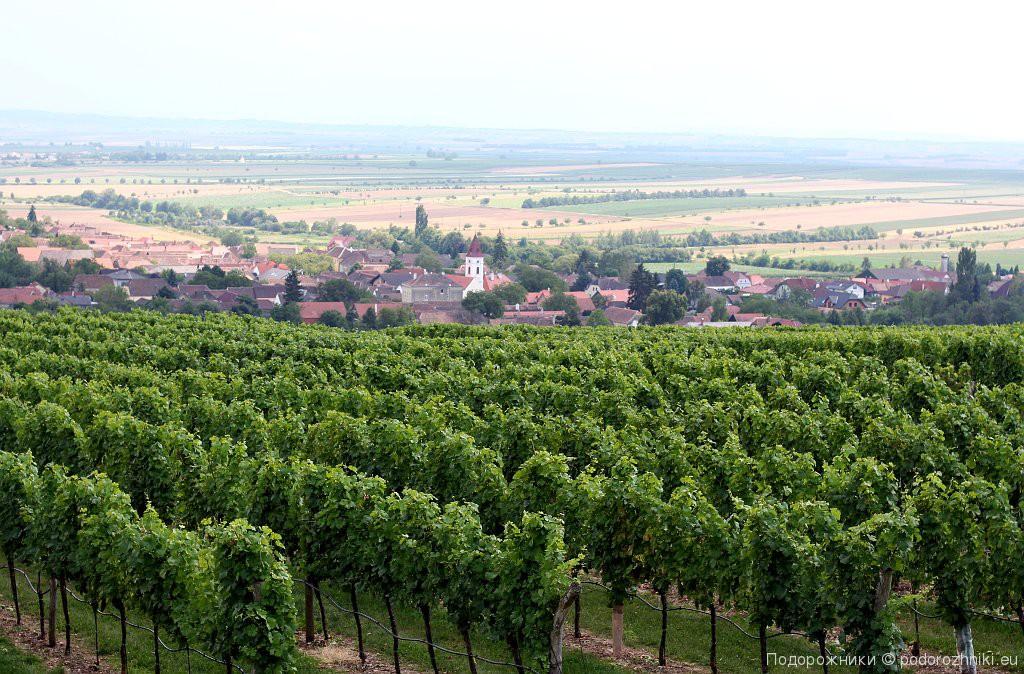Виноградники Миттеррецбаха