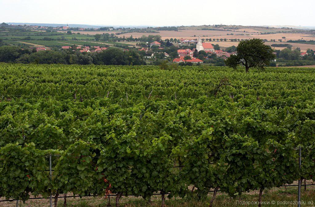 Виноградник Рецбаха