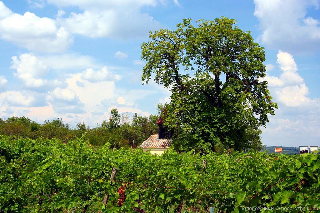 Часовня среди виноградников - Миттеррецбах