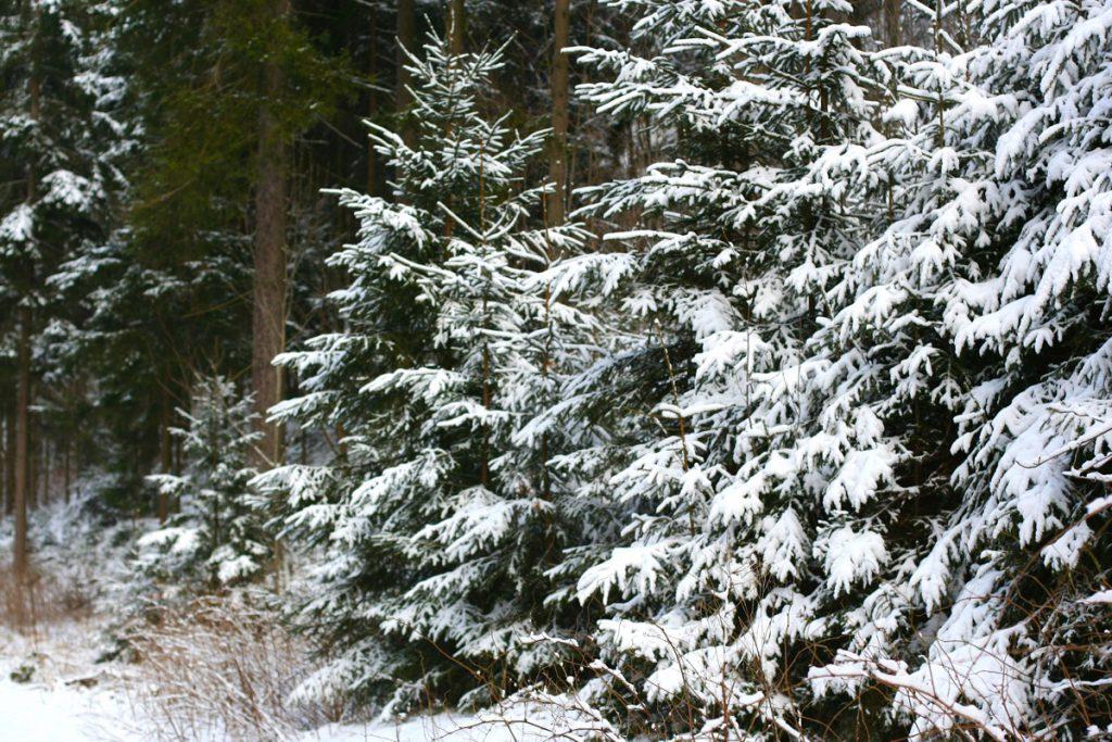 Безручова долина. Зима